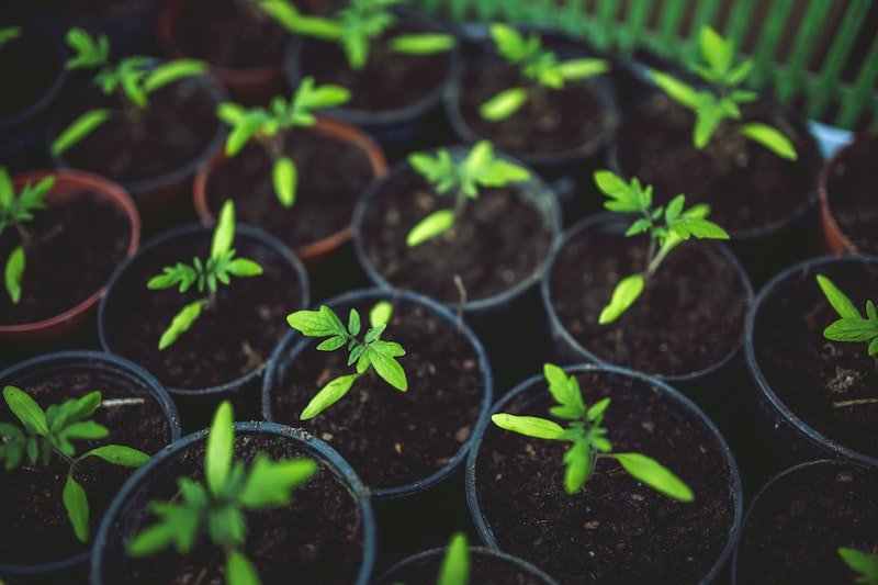 Construisez une serre de jardin en plexiglass