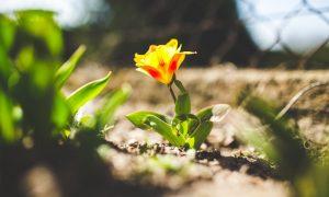 Relooker jardin pour printemps