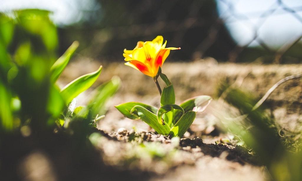 7 conseils pour votre jardin de printemps