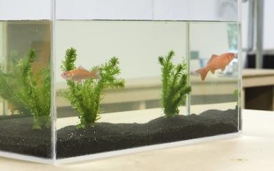 DIY : Fabriquer un aquarium sur mesure en plexiglass