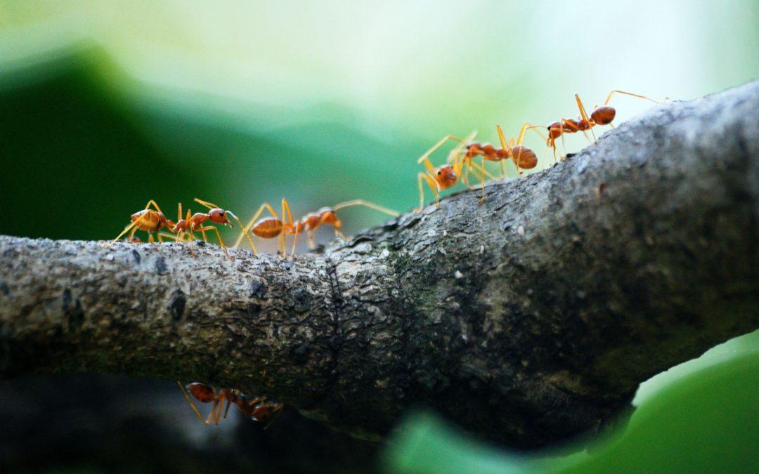 Comment construire une fourmilière en plexiglass ?